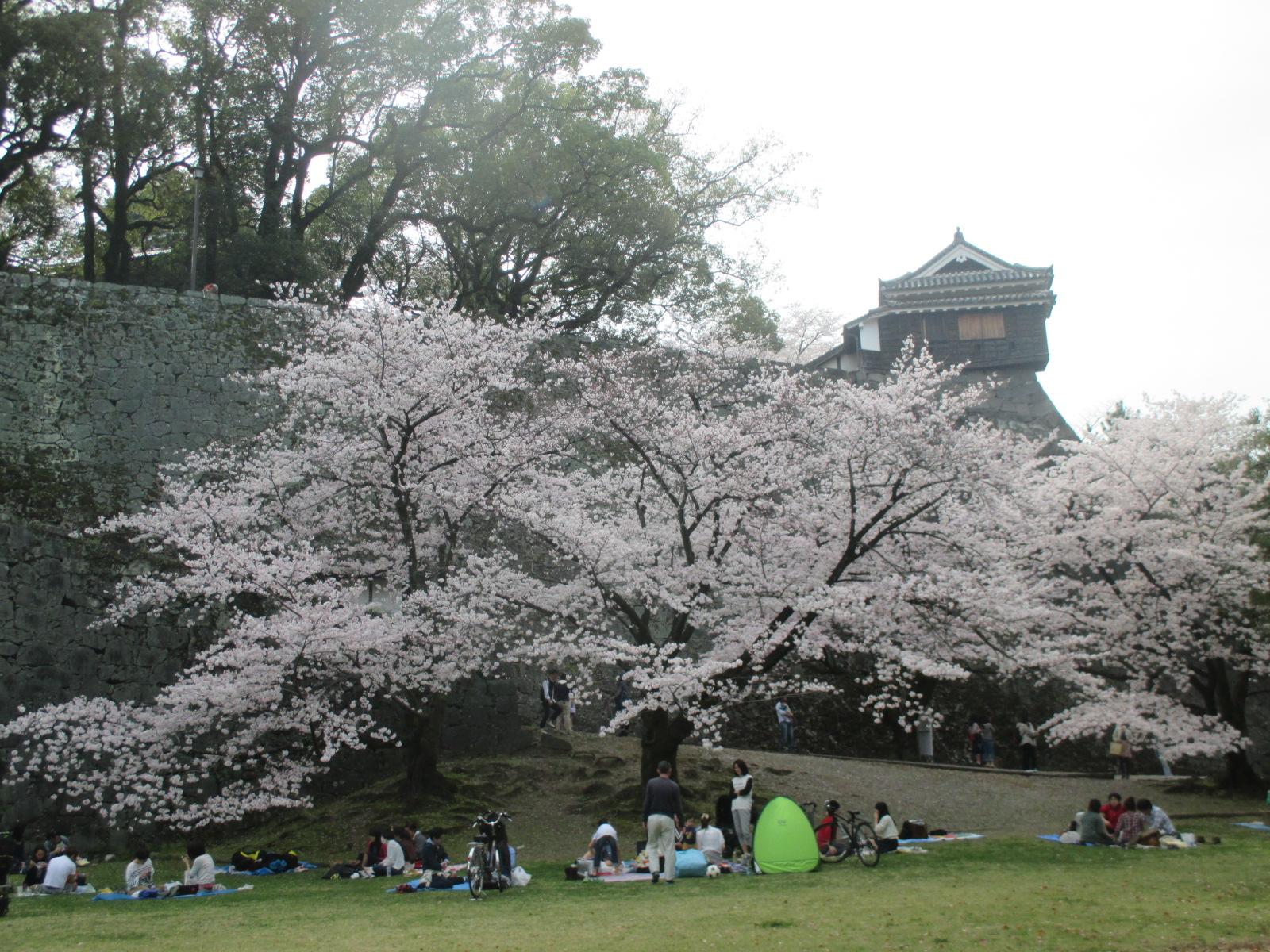 桜 あふれ